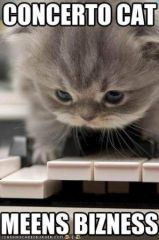 funny-pictures-concerto-cat.jpg