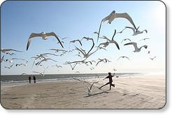 Running with the seagulls - Eschipul - CC BySa