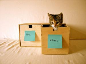 organized cat