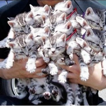 CHATONS, le collectif anti-GAFAM?