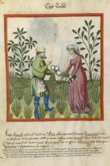 (manuscrit médiéval, banque d'images BNF)