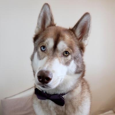 Oskar, le chien de Laura