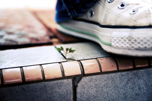 une basket posée sur le rebord d'un carrelage, avec une minuscule plante qui pointe quelques feuilles et qui sort du joint entre deux tuiles.