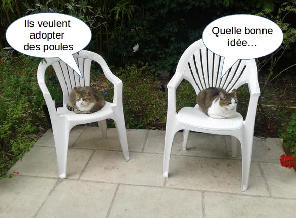 """deux chats discutent l'air renfrogné : """"ils veulent adopter de spoules"""" """"quelle bonne idée""""..."""