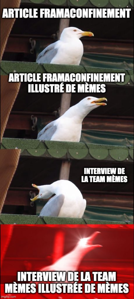 Mème d'une mouette prenant de plus en plus d'élan pour crier et sous-titré avec « article Framaconfinement », puis « article Framaconfinement illustré de mèmes », ensuite « interview de la team mèmes », et enfin « Interview de la team mèmes illustrée de mèmes »