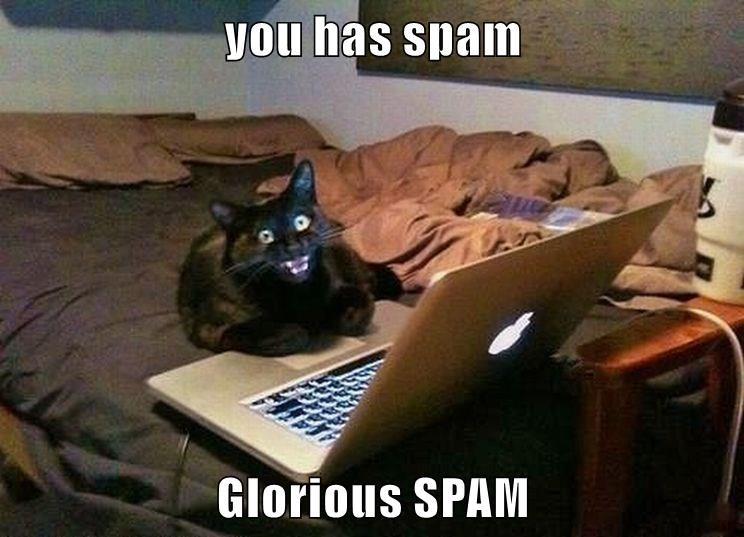 Un chat devant un ordinateur portable, l'air halluciné. Texte : « You has spam. Glorious SPAM »