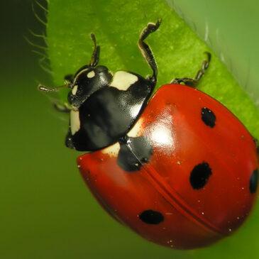 OpenKeys.science, des clés de détermination pour ouvrir les portes de la biodiversité